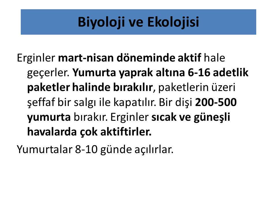 Biyoloji ve Ekolojisi