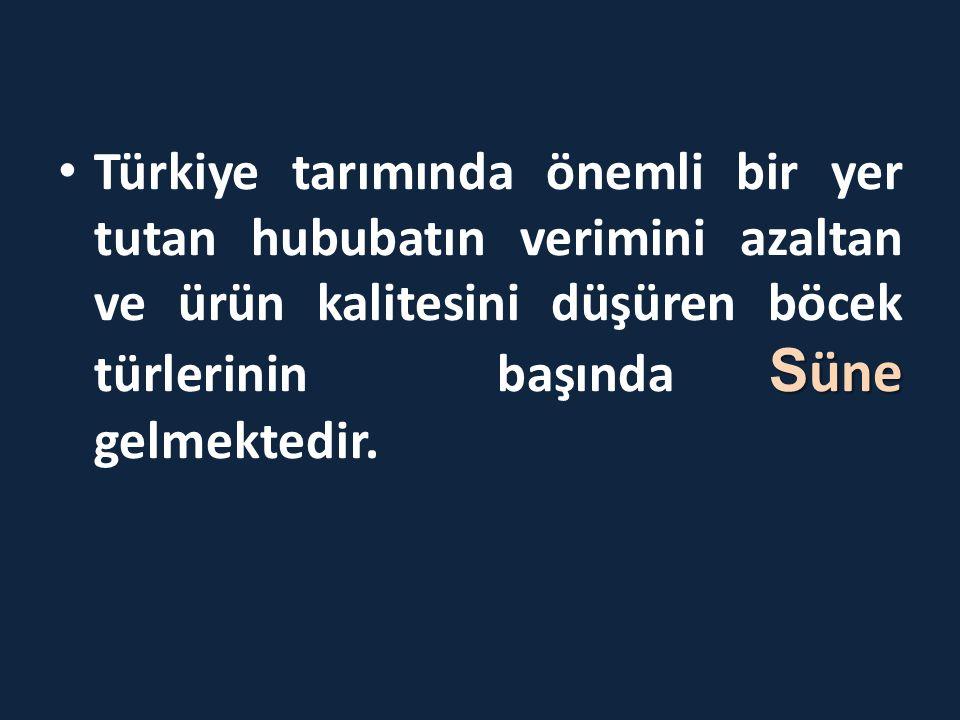Türkiye tarımında önemli bir yer tutan hububatın verimini azaltan ve ürün kalitesini düşüren böcek türlerinin başında Süne gelmektedir.
