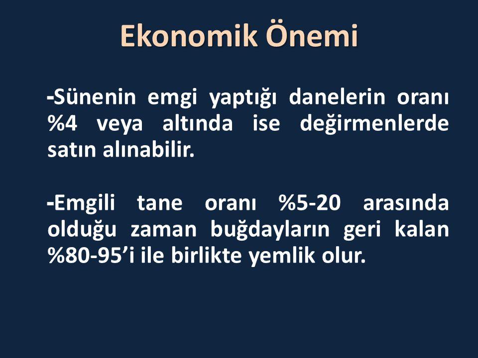 Ekonomik Önemi -Sünenin emgi yaptığı danelerin oranı %4 veya altında ise değirmenlerde satın alınabilir.