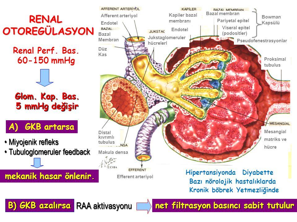 RENAL OTOREGÜLASYON RAA aktivasyonu Renal Perf. Bas. 60-150 mmHg