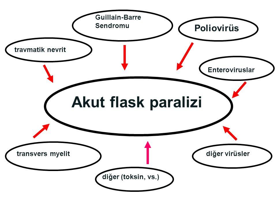 Akut flask paralizi Poliovirüs Guillain-Barre Sendromu