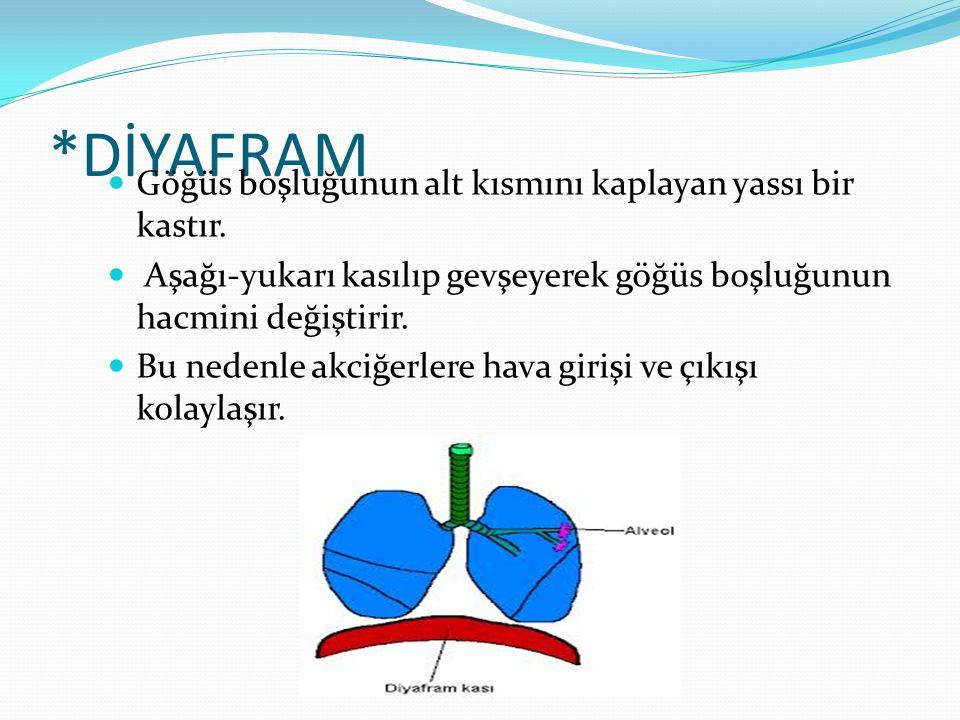 *DİYAFRAM Göğüs boşluğunun alt kısmını kaplayan yassı bir kastır.
