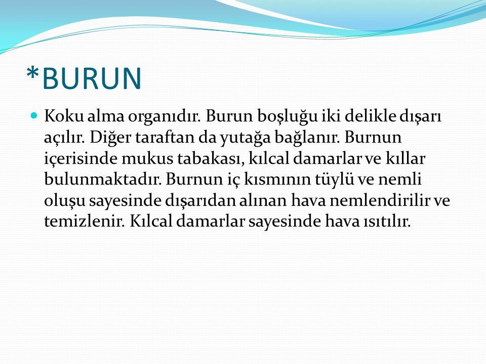 *BURUN