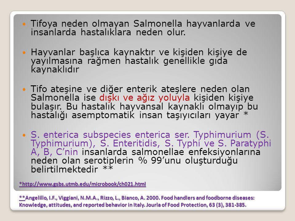 Tifoya neden olmayan Salmonella hayvanlarda ve insanlarda hastalıklara neden olur.