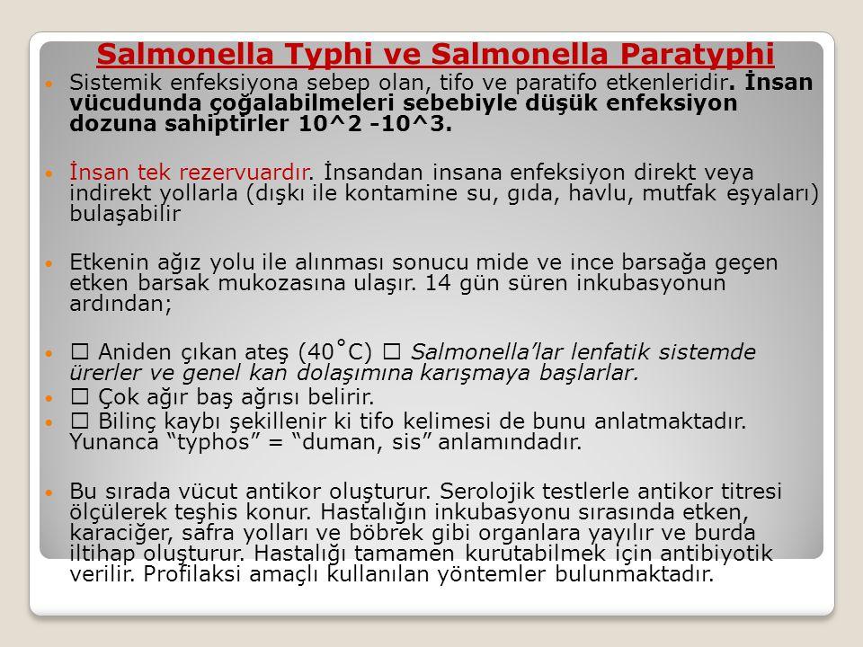 Salmonella Typhi ve Salmonella Paratyphi