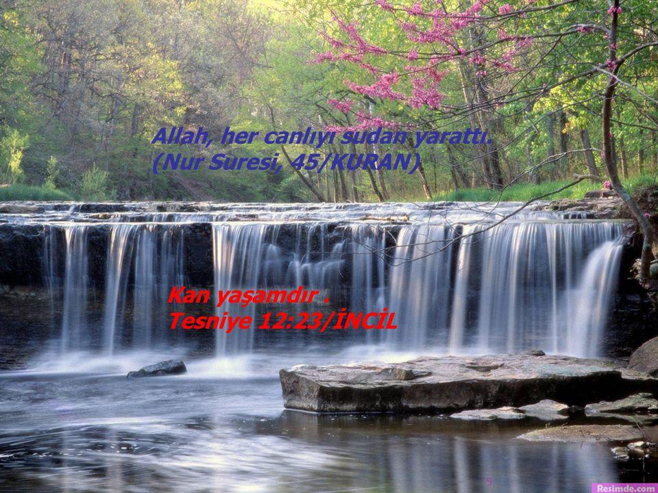 Allah, her canlıyı sudan yarattı. (Nur Suresi, 45/KURAN)