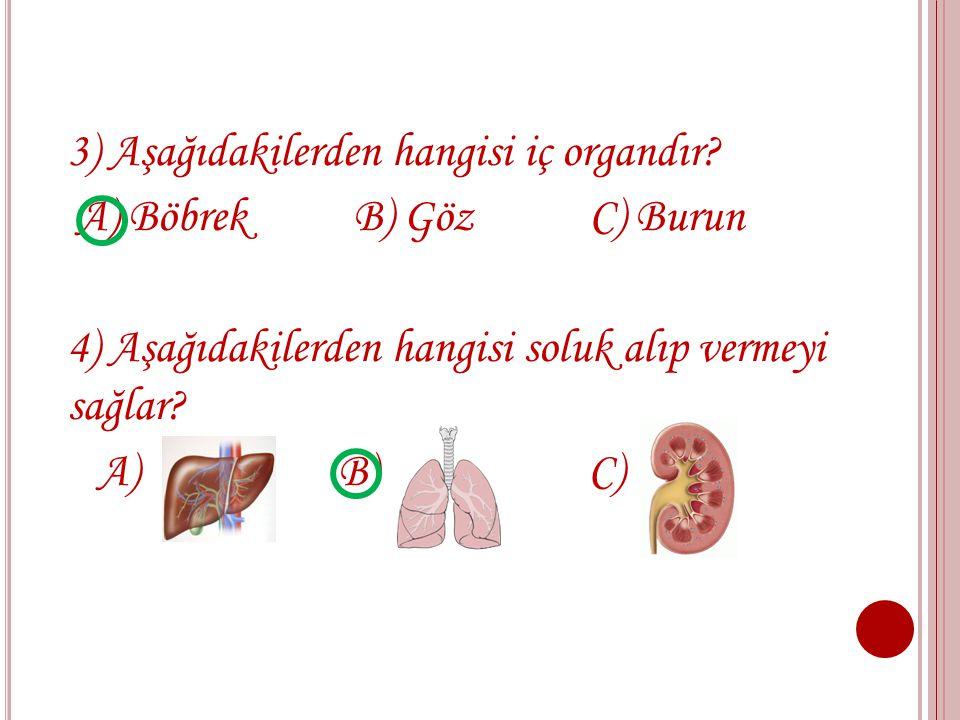 3) Aşağıdakilerden hangisi iç organdır
