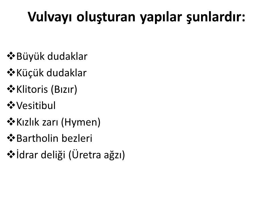 Vulvayı oluşturan yapılar şunlardır: