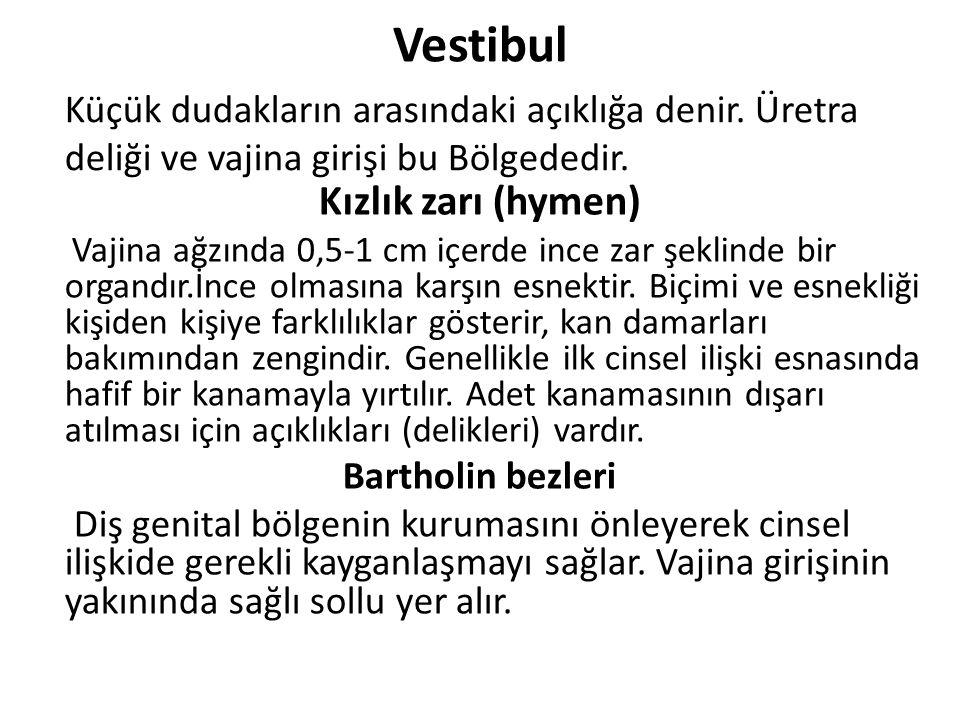 Vestibul Kızlık zarı (hymen)