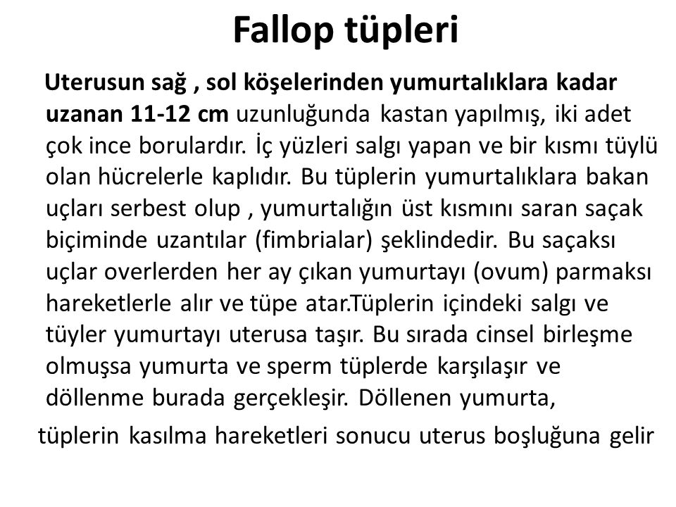 Fallop tüpleri