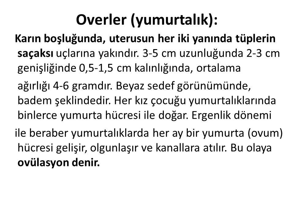Overler (yumurtalık):