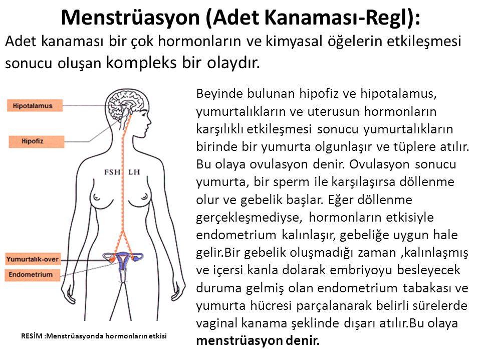 Menstrüasyon (Adet Kanaması-Regl):