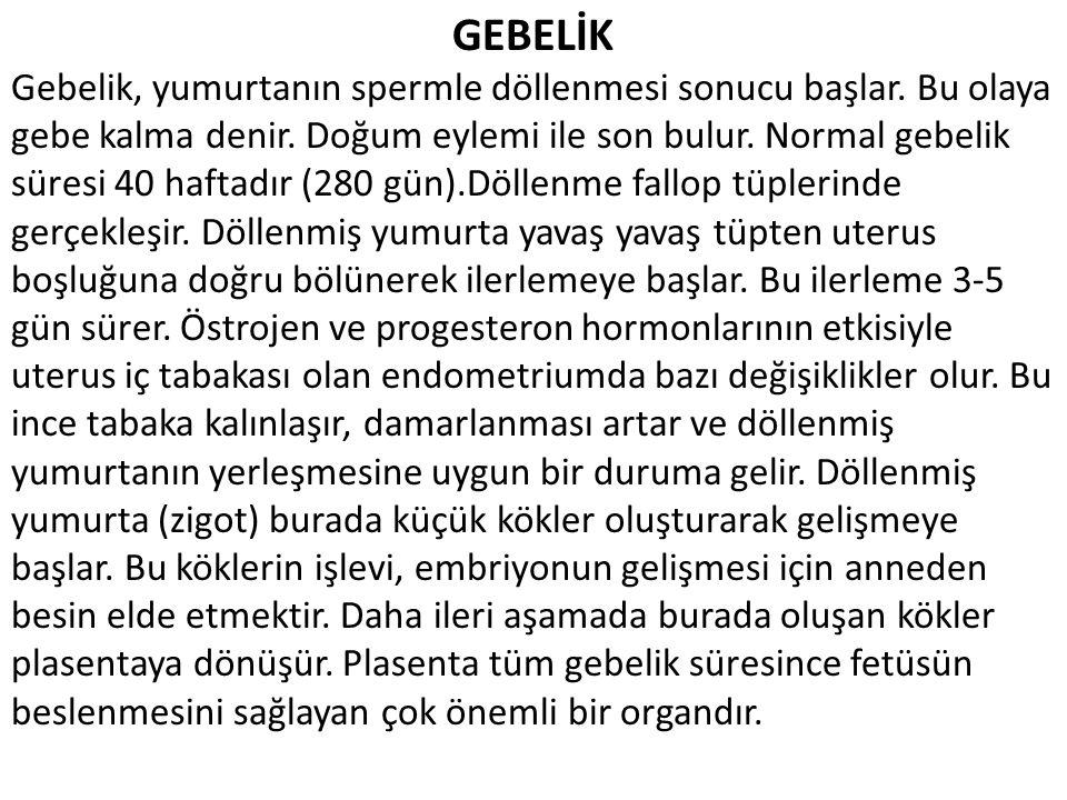 GEBELİK
