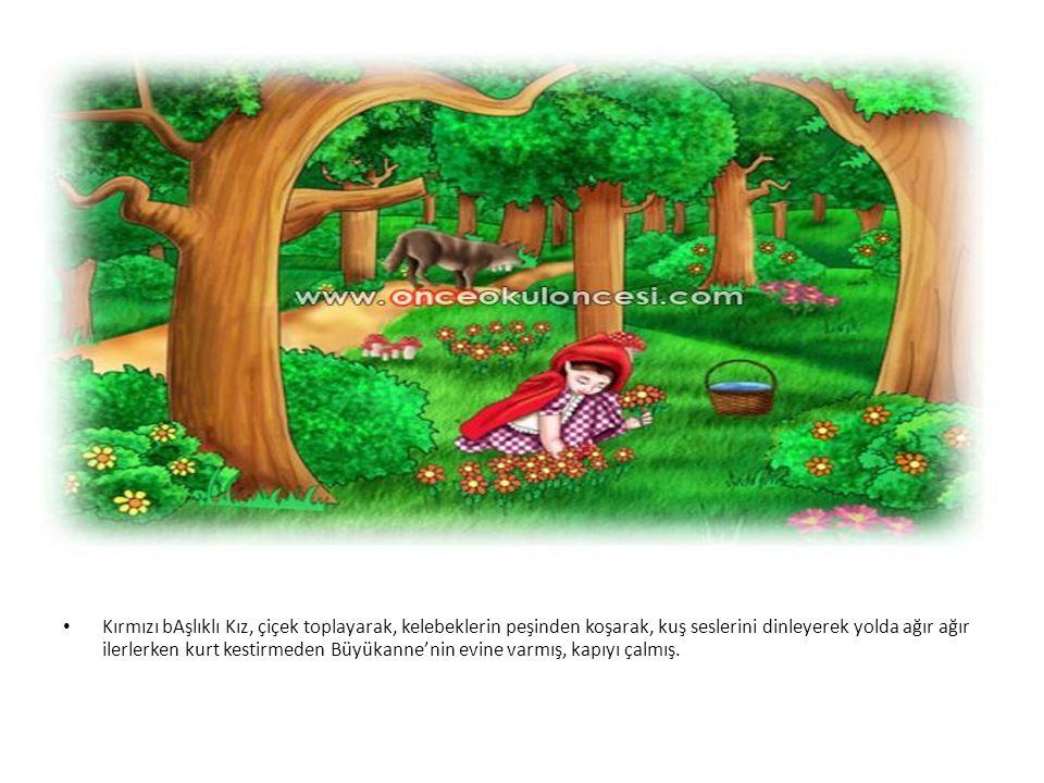 Kırmızı bAşlıklı Kız, çiçek toplayarak, kelebeklerin peşinden koşarak, kuş seslerini dinleyerek yolda ağır ağır ilerlerken kurt kestirmeden Büyükanne'nin evine varmış, kapıyı çalmış.