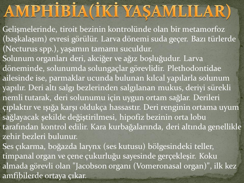 AMPHİBİA(İKİ YAŞAMLILAR)