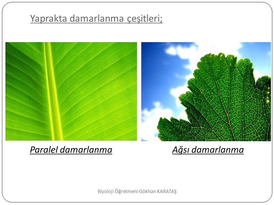 Yaprakta damarlanma çeşitleri;