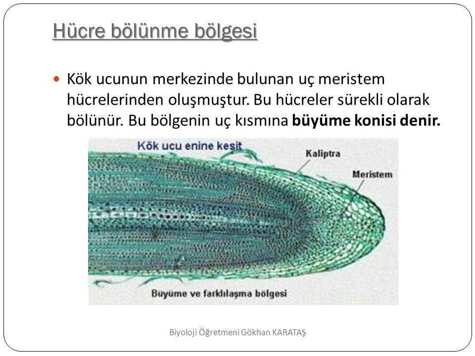 Biyoloji Öğretmeni Gökhan KARATAŞ