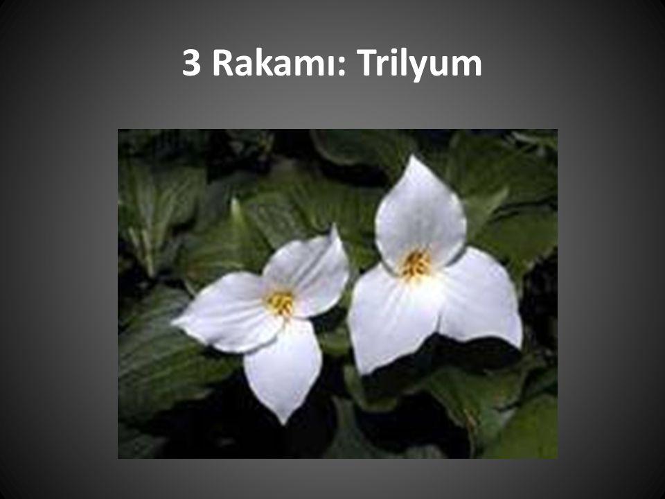 3 Rakamı: Trilyum
