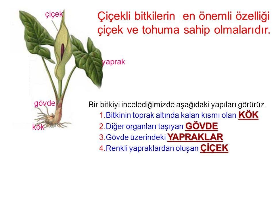 Çiçekli bitkilerin en önemli özelliği