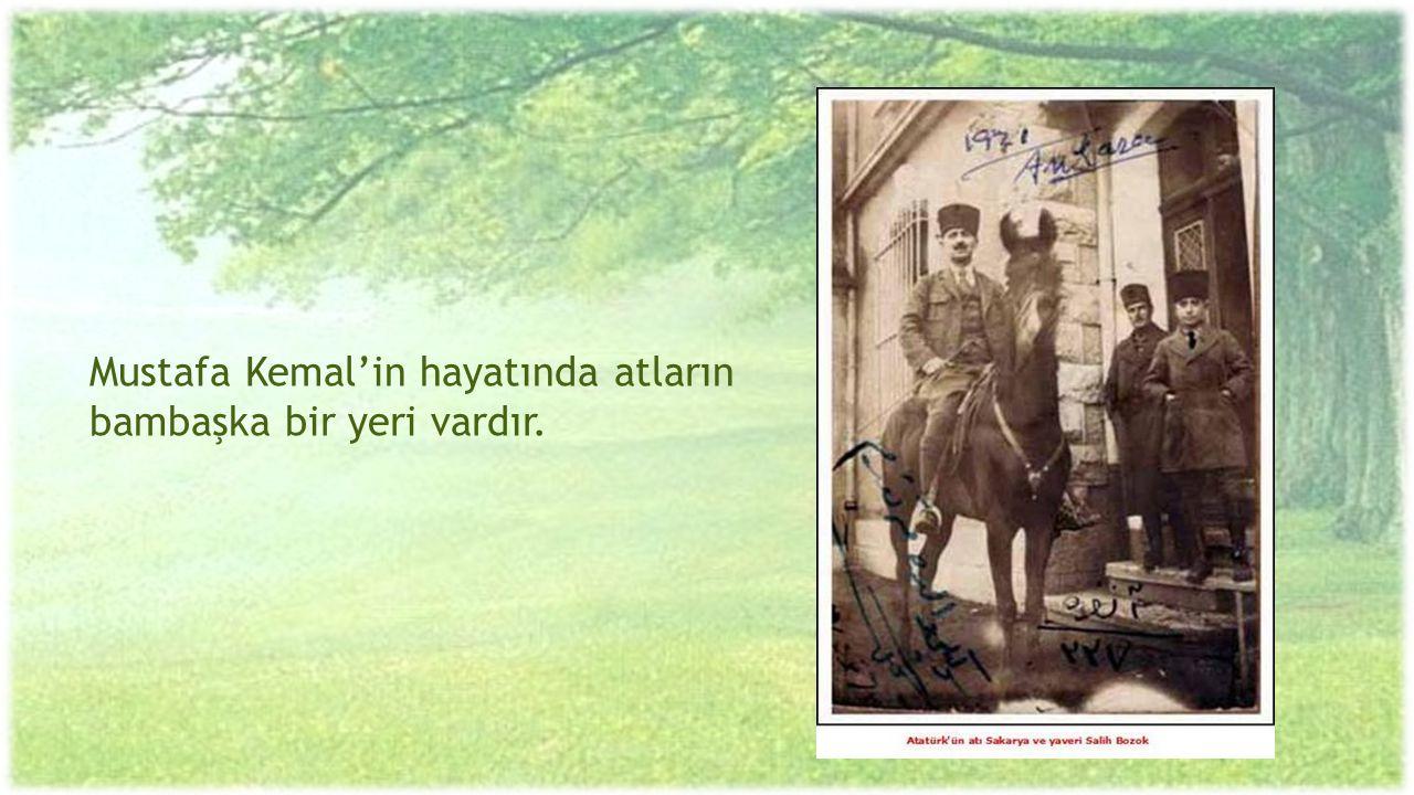 Mustafa Kemal'in hayatında atların bambaşka bir yeri vardır.