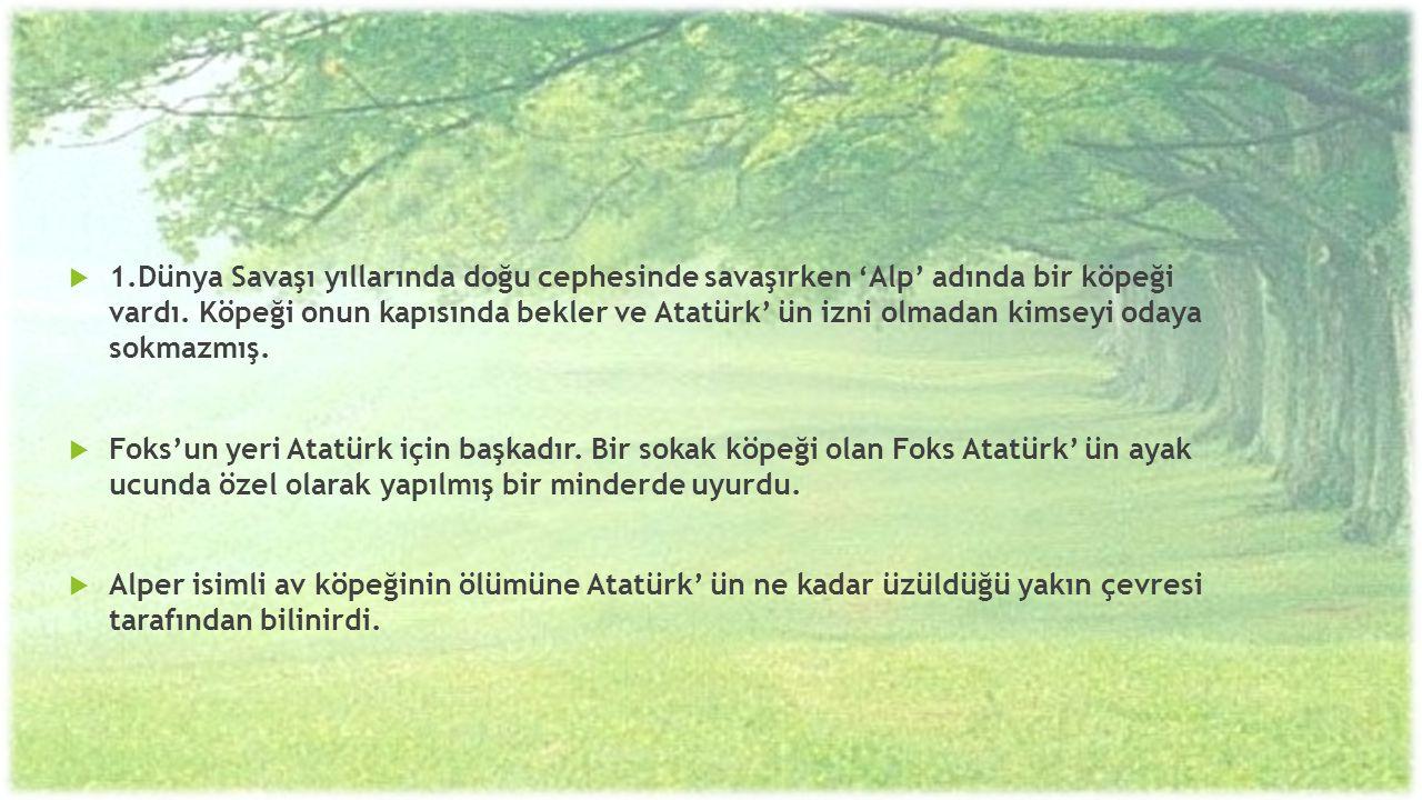 1.Dünya Savaşı yıllarında doğu cephesinde savaşırken 'Alp' adında bir köpeği vardı. Köpeği onun kapısında bekler ve Atatürk' ün izni olmadan kimseyi odaya sokmazmış.