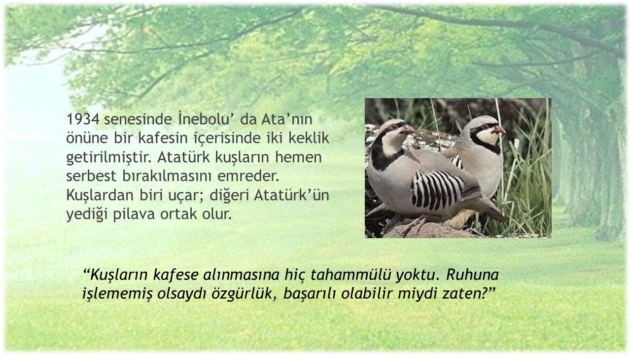 1934 senesinde İnebolu' da Ata'nın önüne bir kafesin içerisinde iki keklik getirilmiştir. Atatürk kuşların hemen serbest bırakılmasını emreder. Kuşlardan biri uçar; diğeri Atatürk'ün yediği pilava ortak olur.