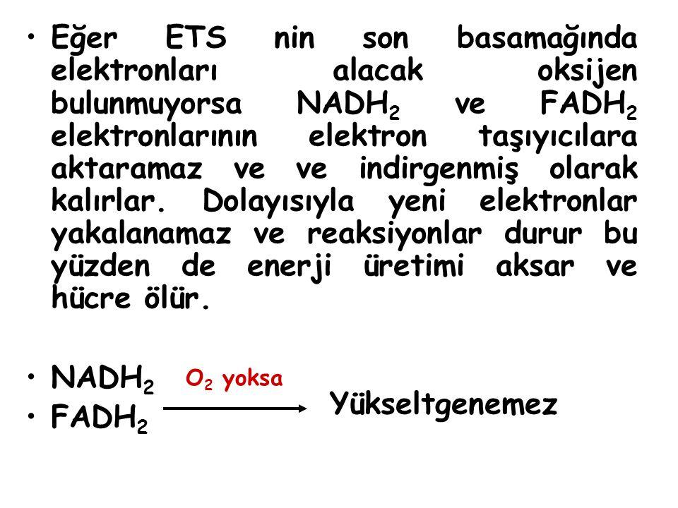 Eğer ETS nin son basamağında elektronları alacak oksijen bulunmuyorsa NADH2 ve FADH2 elektronlarının elektron taşıyıcılara aktaramaz ve ve indirgenmiş olarak kalırlar. Dolayısıyla yeni elektronlar yakalanamaz ve reaksiyonlar durur bu yüzden de enerji üretimi aksar ve hücre ölür.