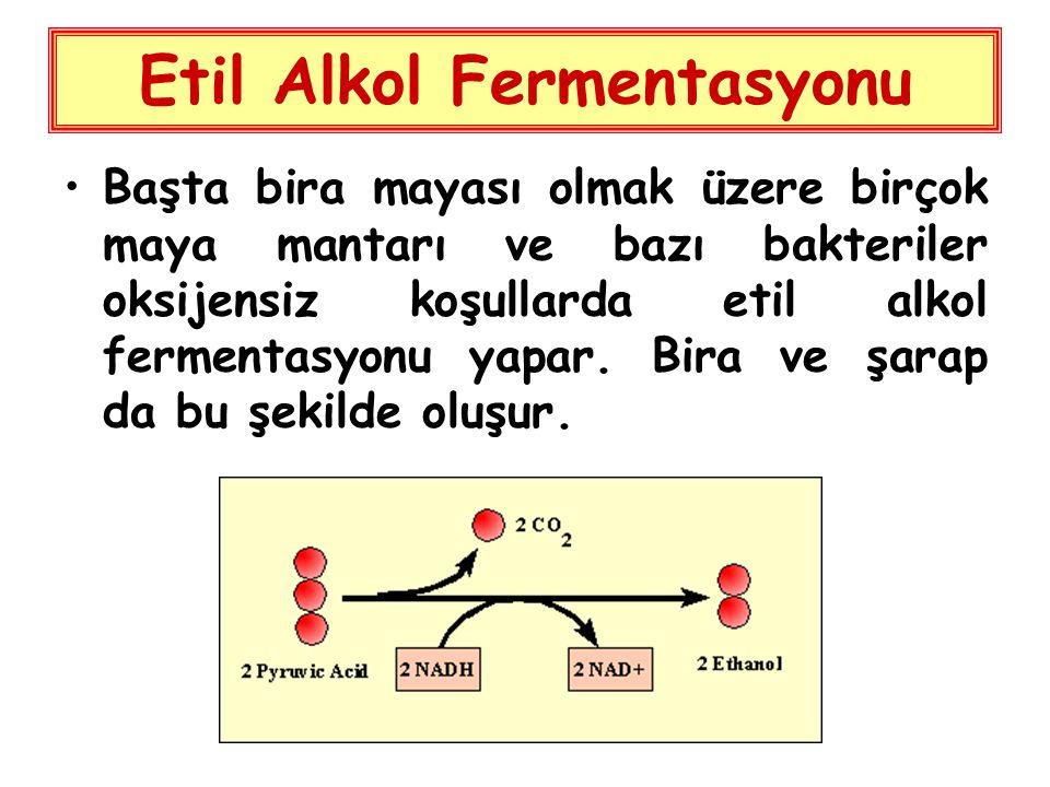 Etil Alkol Fermentasyonu