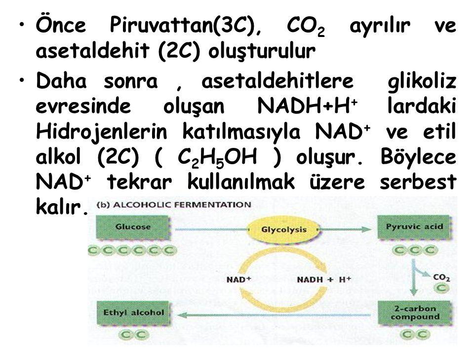 Önce Piruvattan(3C), CO2 ayrılır ve asetaldehit (2C) oluşturulur