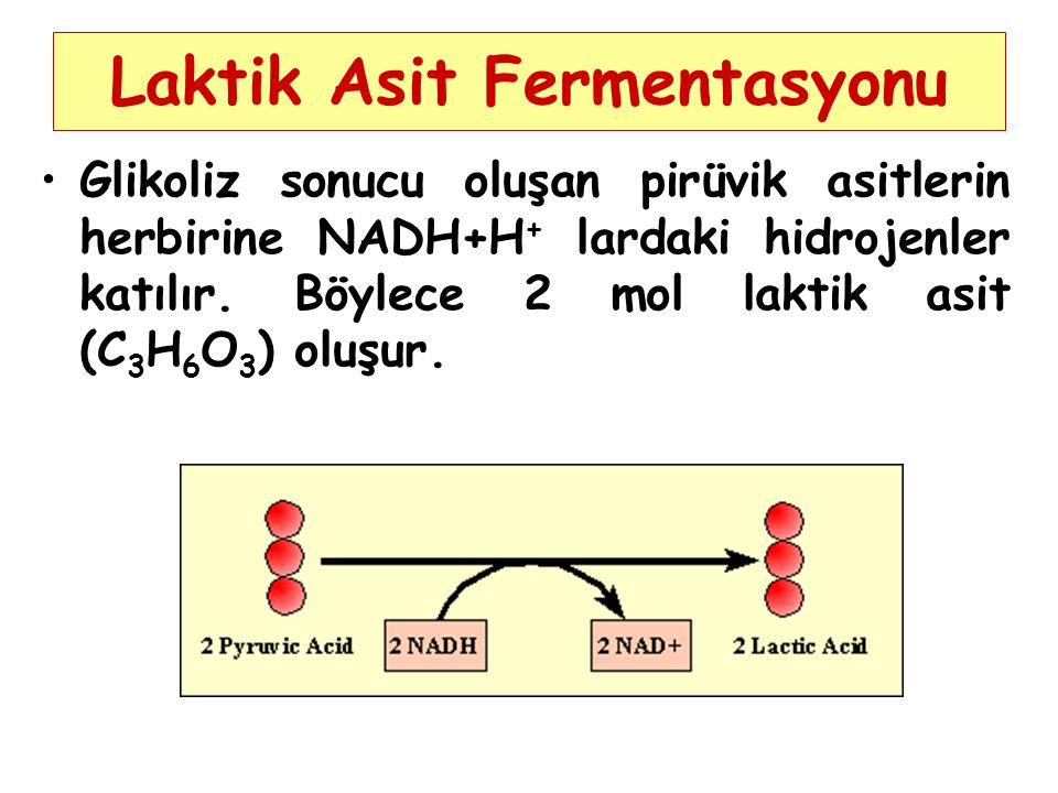 Laktik Asit Fermentasyonu