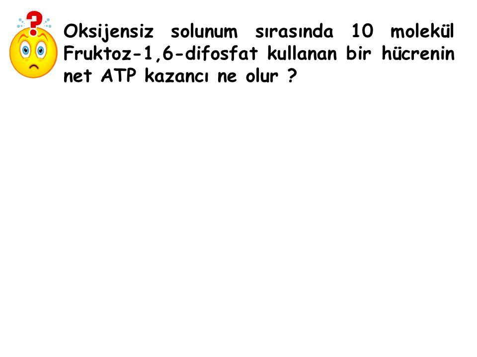 Oksijensiz solunum sırasında 10 molekül Fruktoz-1,6-difosfat kullanan bir hücrenin net ATP kazancı ne olur