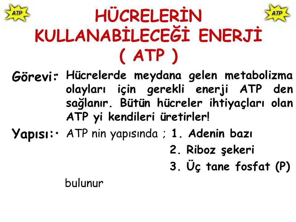 HÜCRELERİN KULLANABİLECEĞİ ENERJİ ( ATP )