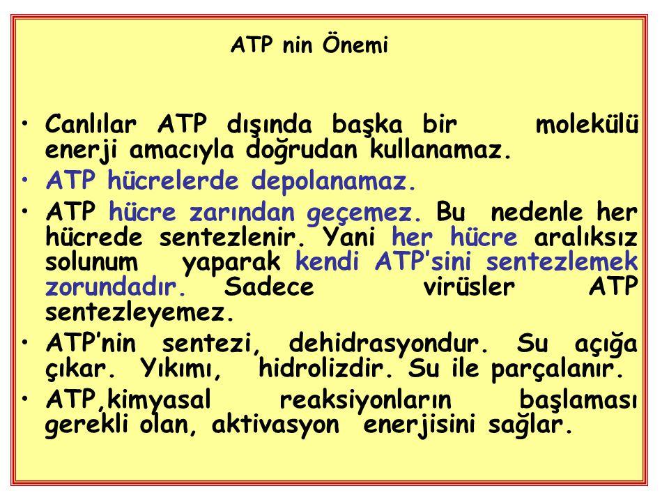 ATP hücrelerde depolanamaz.