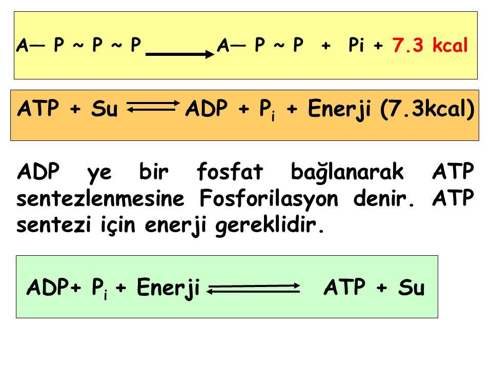 A― P ~ P ~ P A― P ~ P + Pi + 7.3 kcal