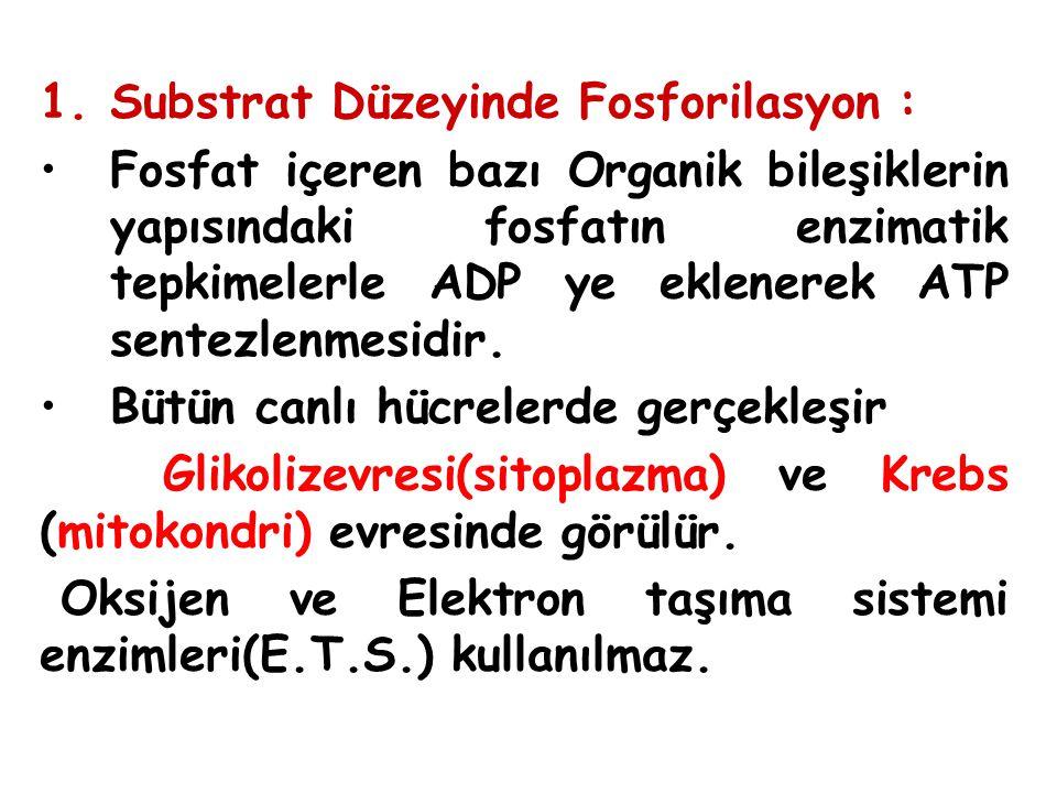 Substrat Düzeyinde Fosforilasyon :