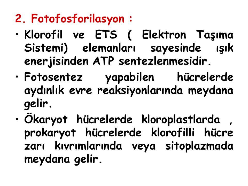 2. Fotofosforilasyon : Klorofil ve ETS ( Elektron Taşıma Sistemi) elemanları sayesinde ışık enerjisinden ATP sentezlenmesidir.