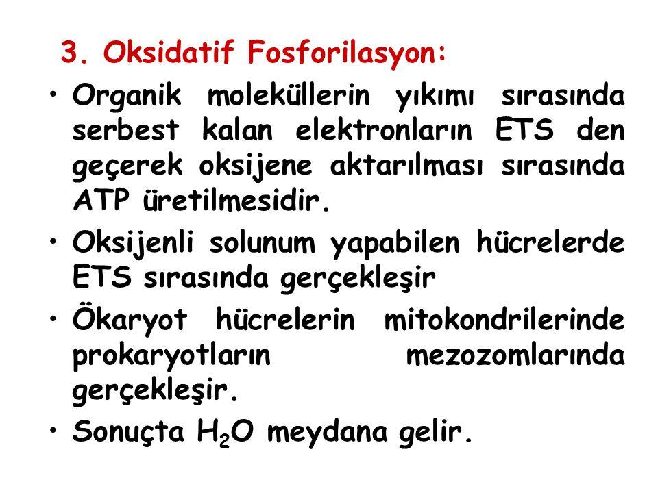 3. Oksidatif Fosforilasyon: