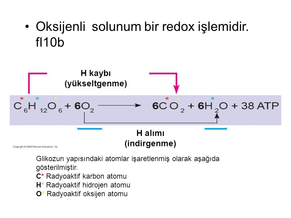 Oksijenli solunum bir redox işlemidir. fl10b