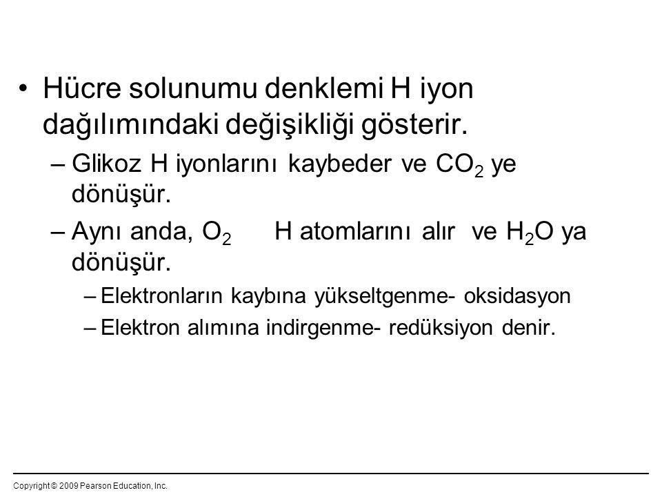 Hücre solunumu denklemi H iyon dağılımındaki değişikliği gösterir.