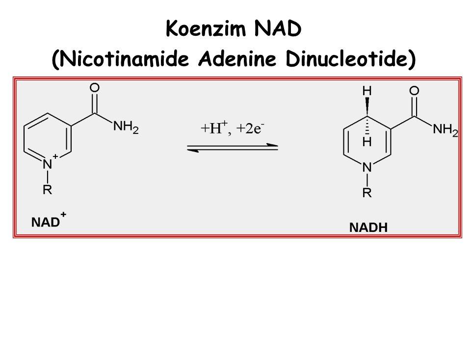 (Nicotinamide Adenine Dinucleotide)