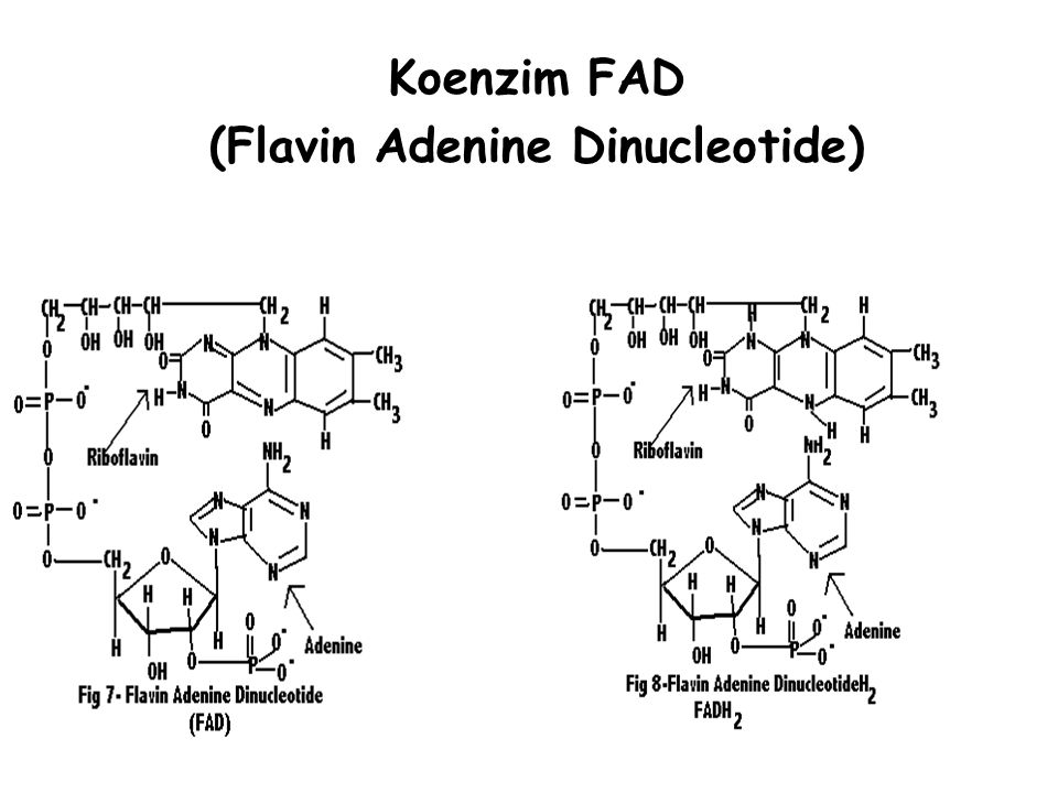 (Flavin Adenine Dinucleotide)