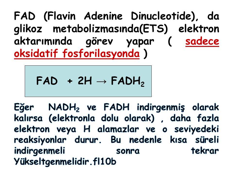 FAD (Flavin Adenine Dinucleotide), da glikoz metabolizmasında(ETS) elektron aktarımında görev yapar ( sadece oksidatif fosforilasyonda )