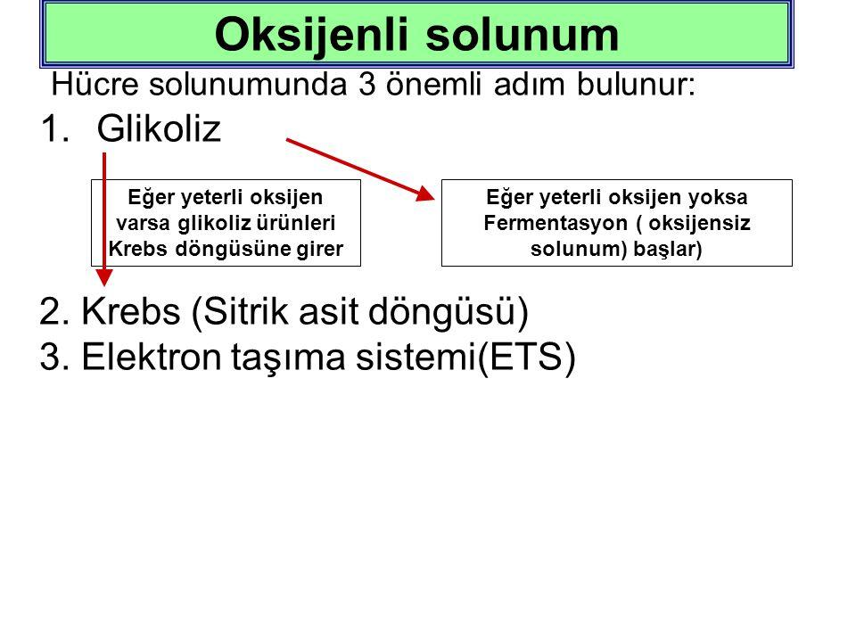Oksijenli solunum Hücre solunumunda 3 önemli adım bulunur: Glikoliz