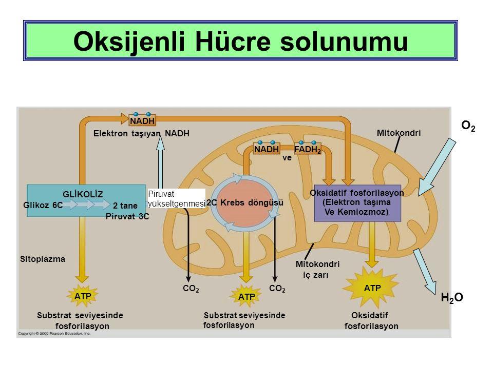 Oksijenli Hücre solunumu