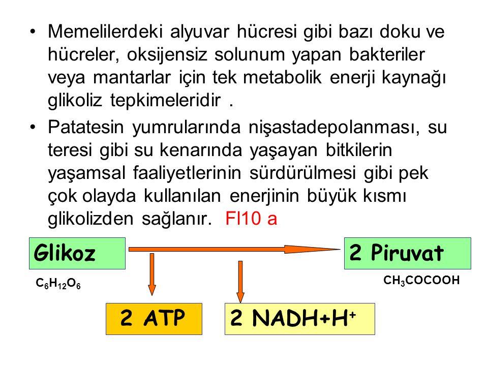 Glikoz 2 Piruvat 2 ATP 2 NADH+H+