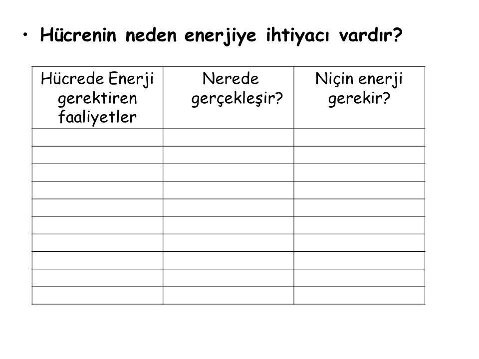 Hücrede Enerji gerektiren faaliyetler