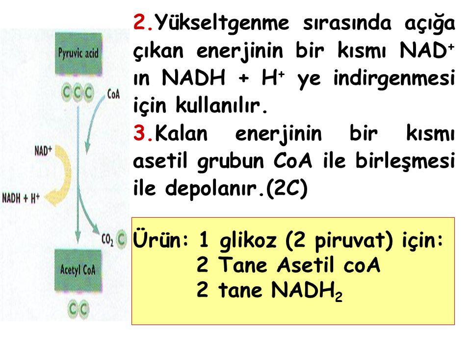2.Yükseltgenme sırasında açığa çıkan enerjinin bir kısmı NAD+ ın NADH + H+ ye indirgenmesi için kullanılır.