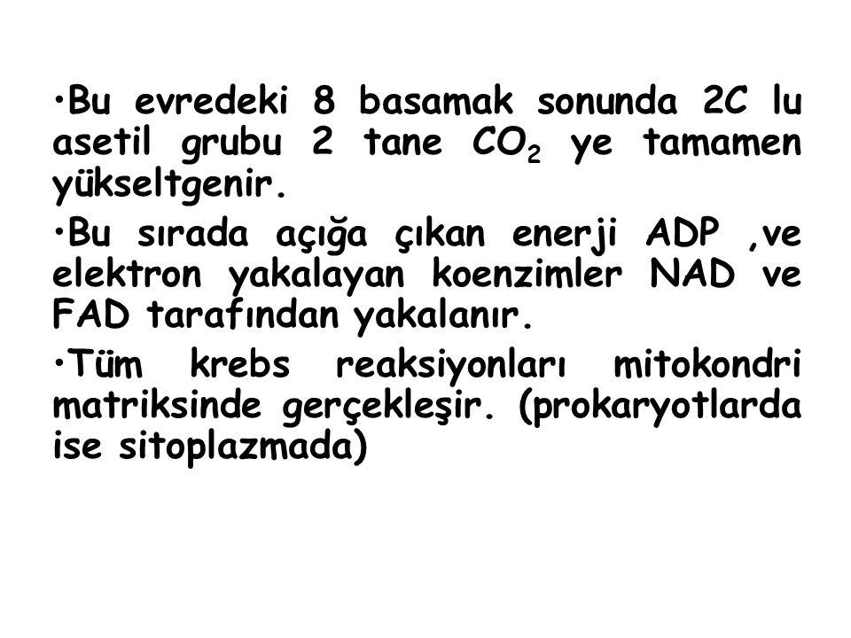 Bu evredeki 8 basamak sonunda 2C lu asetil grubu 2 tane CO2 ye tamamen yükseltgenir.