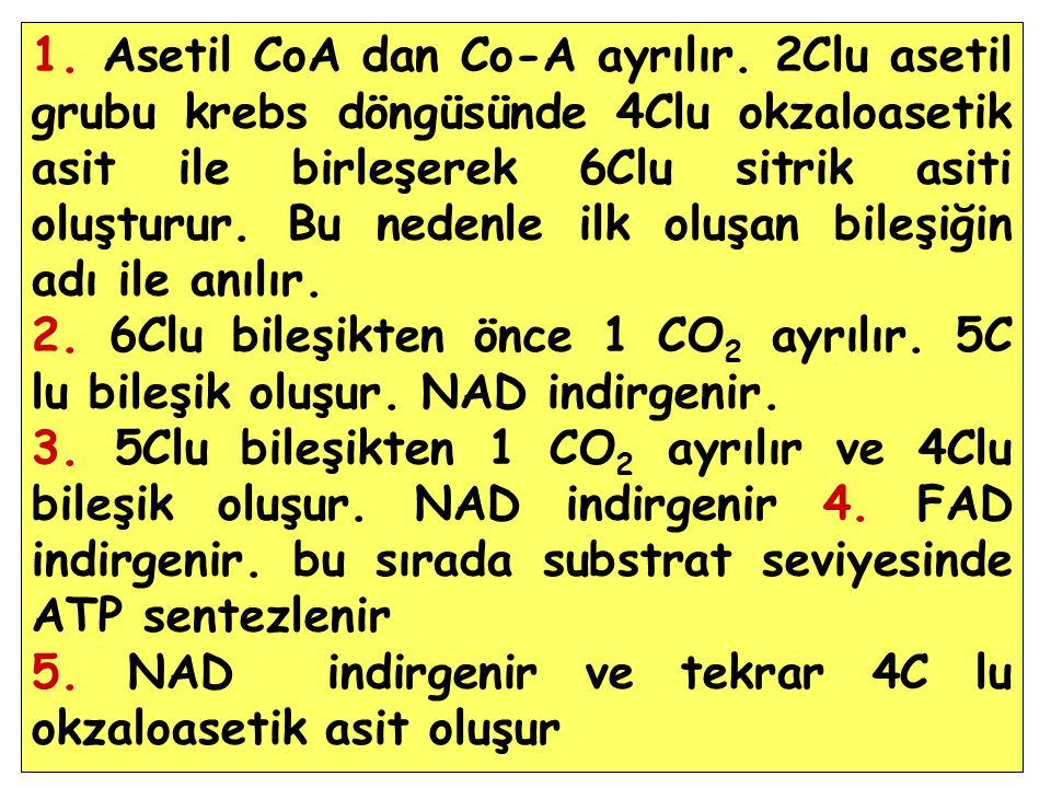 1. Asetil CoA dan Co-A ayrılır