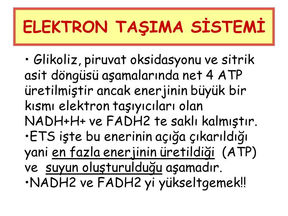 ELEKTRON TAŞIMA SİSTEMİ